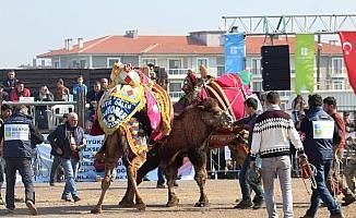 Sahne pehlivan develerindi
