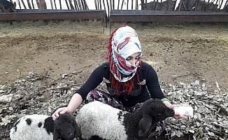 Annesiz kalan kuzulara annelik yapıyor