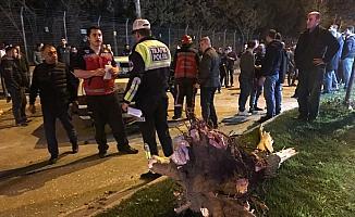 Kontrolden çıkan otomobil ağacı kökünden söktü: 3 yaralı