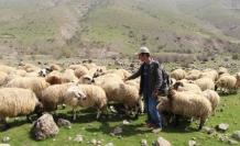 Çobandan demokrasi dersi