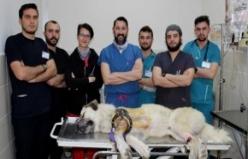 Kangalı dünyada ilk kez uygulanan yöntemle tedavi ettiler
