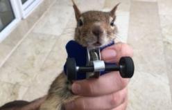 Sincap Karamel protezine alıştı