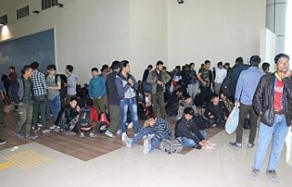 227 kaçak göçmen sınır dışı edildi