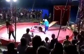 Ayı sirkte görevliye saldırdı