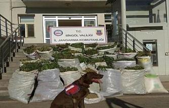 Bingöl'de 300 kilogram esrar ele geçirildi