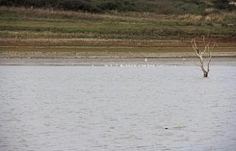Sazlıdere Baraj Gölü'nde kuşların dansı kamerada