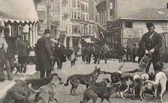 Osmanlılarda Hayvan Hakları