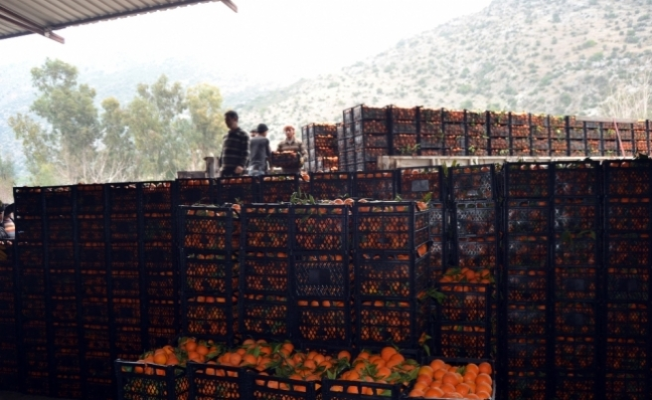 Adana'dan Mehmetçiğe 60 ton portakal