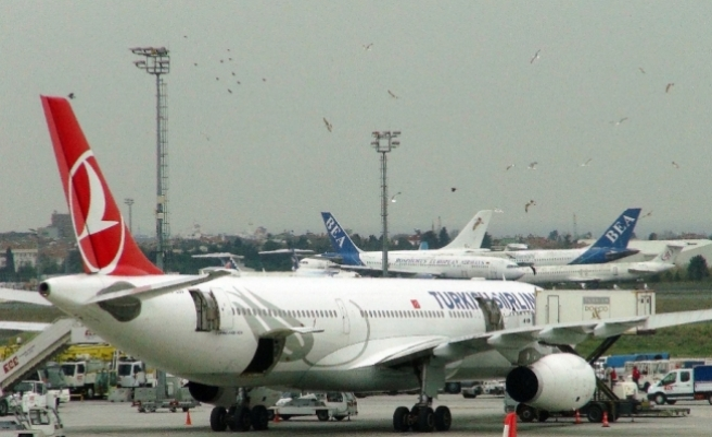 Atatürk Havalimanı'nda uçağa martılardan yoğun ilgi