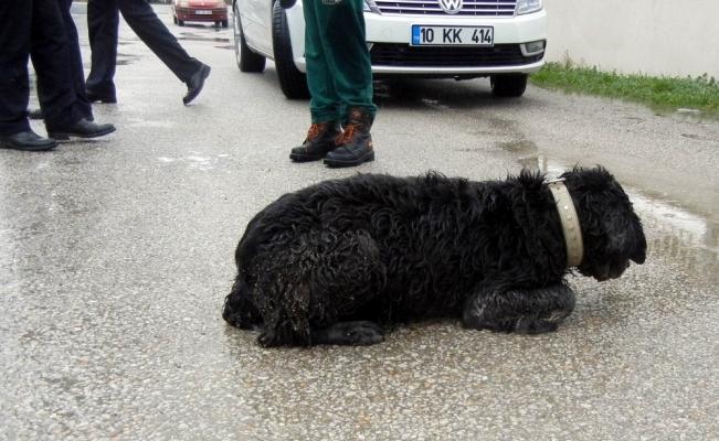 Edremit'te köpek katliamı