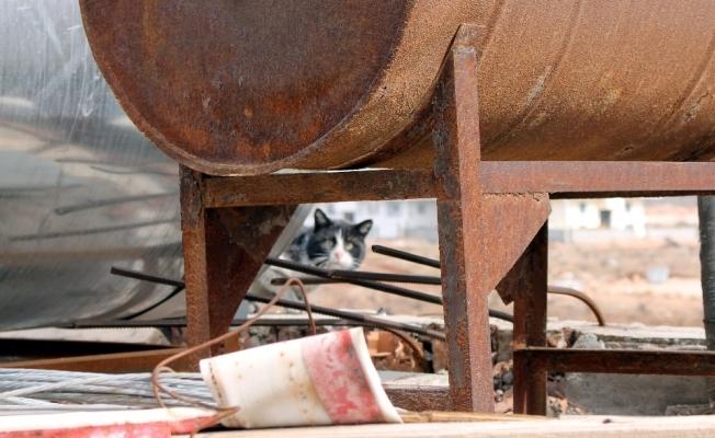 Mahsur kalan kedinin imdadına itfaiye yetişti