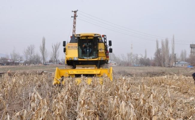 Şubat ayında mısır hasadı