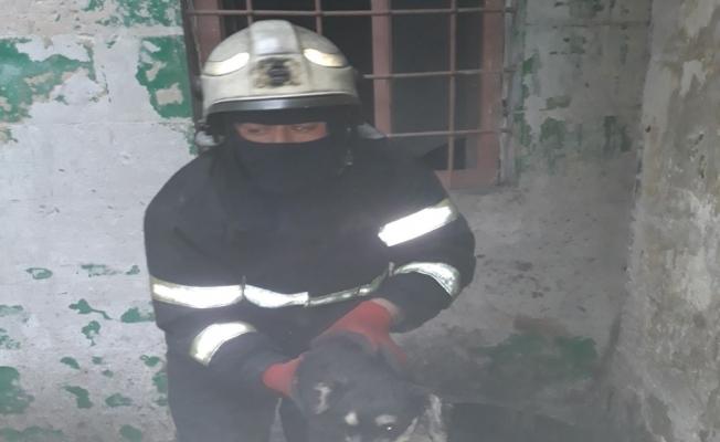 Yavru köpeği alevlerin arasından kurtardılar