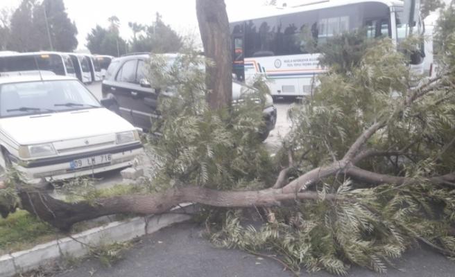 Bodrum'da fırtına hayatı felç etti