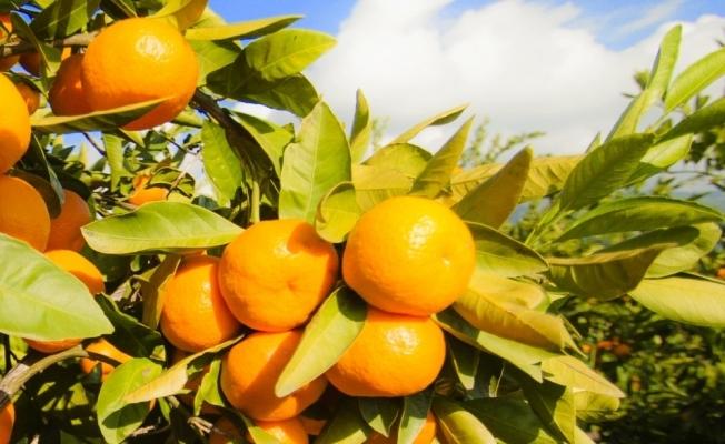 İdrar yolu enfeksiyonu için C vitamini