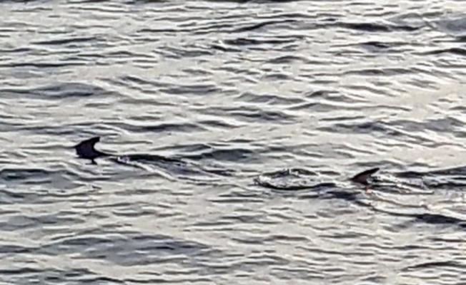 Muğla'da görüldü: Balıkçılar ne olduğuna anlam veremedi