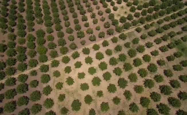 Ormanlar kırsal kalkınmanın lokomotifi oluyor