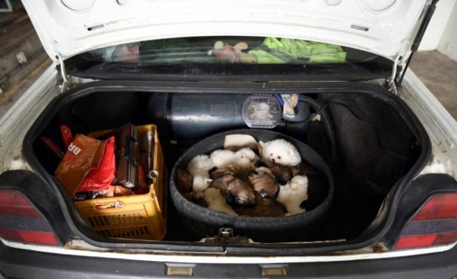 Stepne lastik içinden 15 yavru köpek çıktı