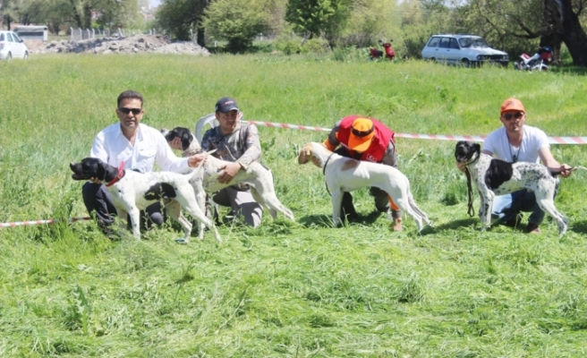 Bu da av köpeklerinin güzellik yarışması