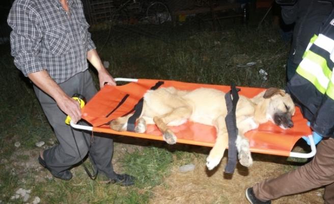 Enkaz altında kalan köpek 16 saat sonra çıkarıldı