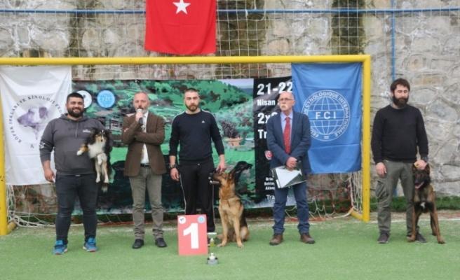 Trabzon'da uluslararası köpek ırkları yarışması