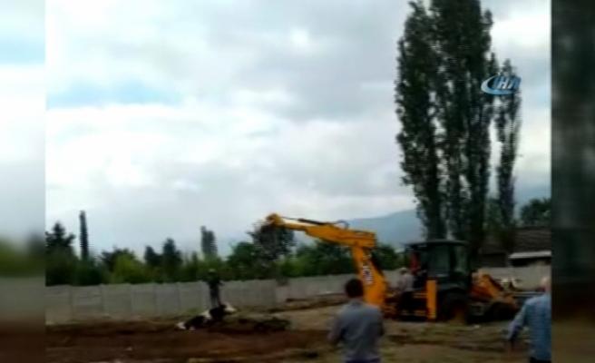 Çamura gömülen inek iş makinesiyle kurtarıldı