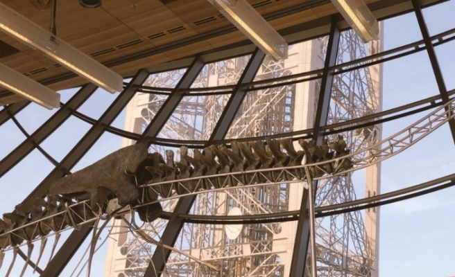 Eyfel'de 157 milyon yıllık dinozor sergileniyor