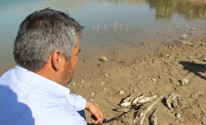 Sivas'ta balıklar karaya vurdu