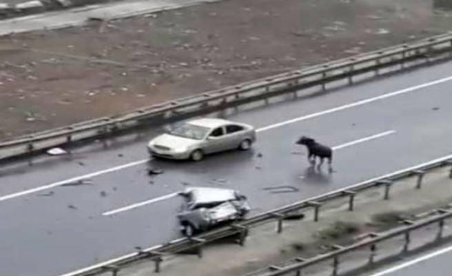 Kurbanlık boğa Trabzon'da kazaya neden oldu: 5 yaralı