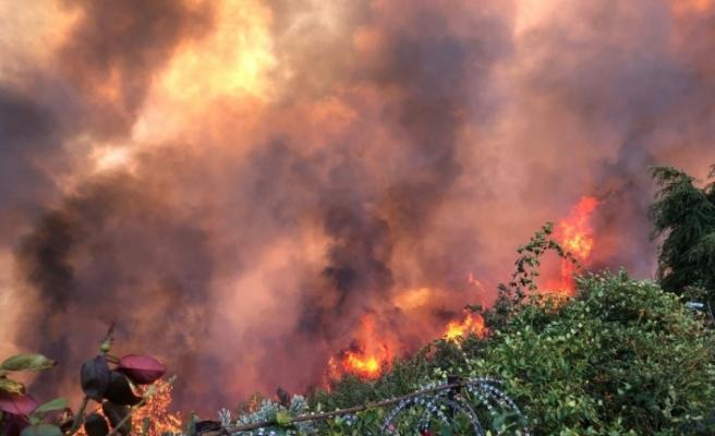 Orman yangını ile ilgili soruşturma başlattı