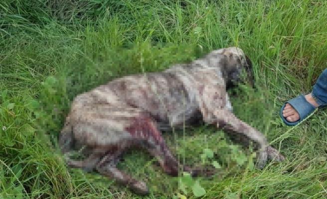 'Rahatsız ediyor' diye köpeği tüfekle vurdu