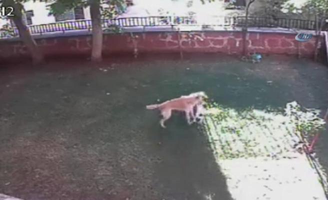 Yavrularının güvenliği için köpekle boğuştu
