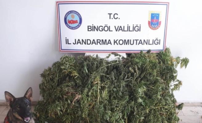 158 kilo uyuşturucu ele geçirildi