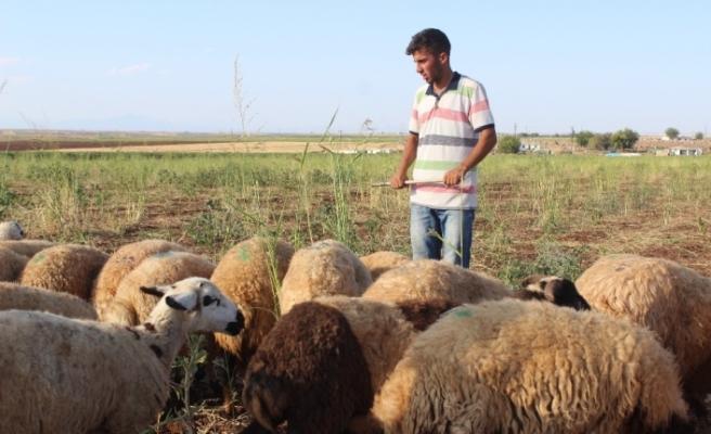 Çobanlık yaparken hazırlandı, diş hekimliğini kazandı