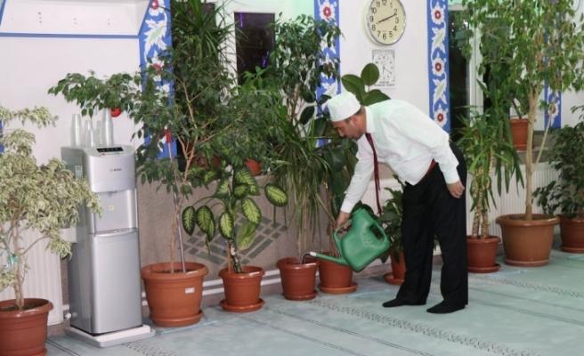 Camiyi botanik bahçesine dönüştürdü