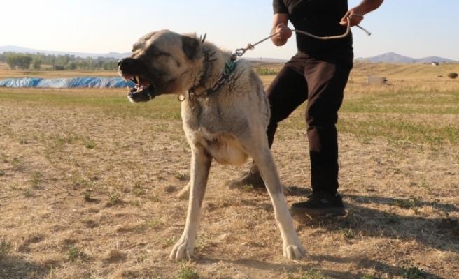 Köpek saldırısına karşı ne yapmalı ?