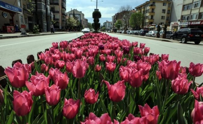 Şehir 1,5 milyon çiçekle rengarenk oldu