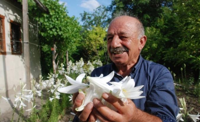 Çiçeğinin kilosu 120 lira, yağı 5 bin avro